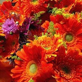 Orange Gerber Daisie mix