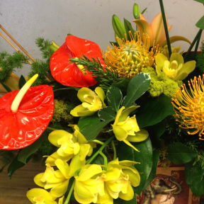 Red & Yellow Tropicals
